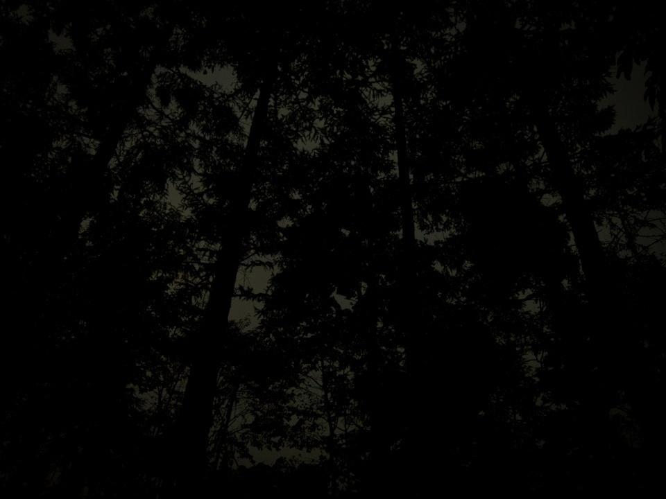 あさまの森オートキャンプ場に行ってきた (2)